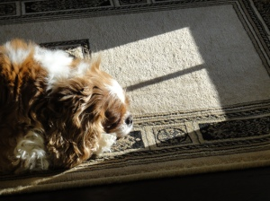 Mia loves to lay in the sun