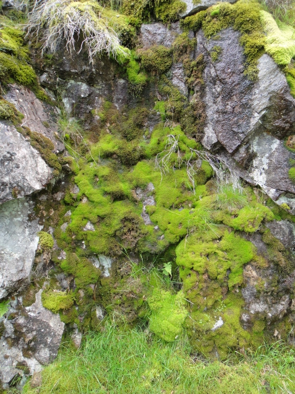 We saw many different types of moss on the mountains.