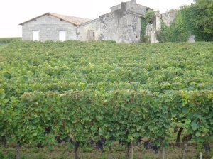 On both sides of the road and around ever bend there were vineyards and old stone houses with shuttered windows
