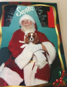 When in Houston take your dog to sit on Santa's lap